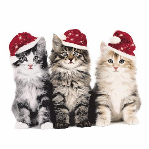 Pörröiset joulukissat ruokaservetti