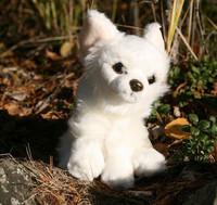 Pieni valkoinen chihuahua