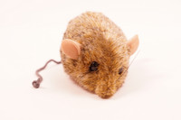 Pieni harmahtava hiiri