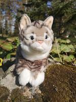 Upea harmaaraitainen kissa