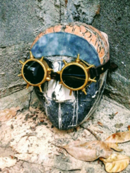 Leather & Brass Goggles, Deluxe model Spike