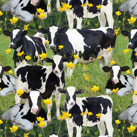 Luomupuuvillatrikoo: Lehmät laitumella