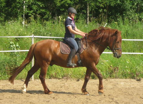 Istuntatunti yksityisopetuksessa omalla hevosella 60 min