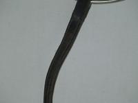Musta nahkainen otsapanta PONY