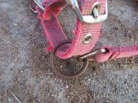 Rymyriimu, entinen punainen, PONY