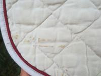Hansbo Sportin neliön mallinen vaalea satulahuopa COB
