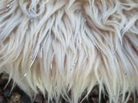 Beige tarrallinen pehmuste riimuun 29 cm