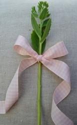 Classic square leveä vaaleanpunainen ruutunauha
