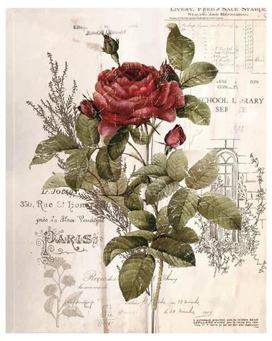 Siirtokuva - Prima Re-Design - Botanical Rose