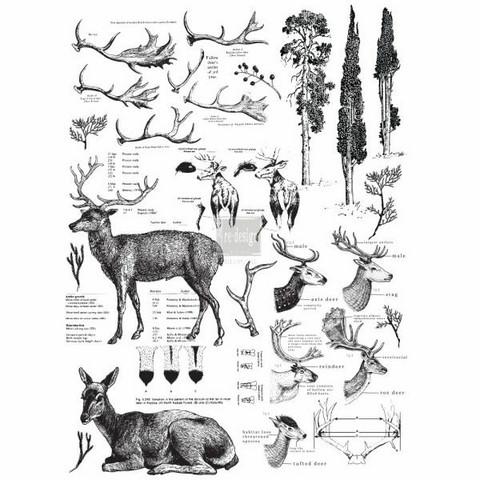 Siirtokuva - Deer - 63 x 88 cm - Prima ReDesign