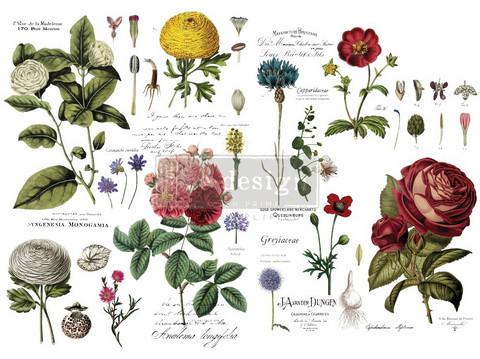 Siirtokuva - Vintage Botanical - 88 x 121 cm - Prima Redesign