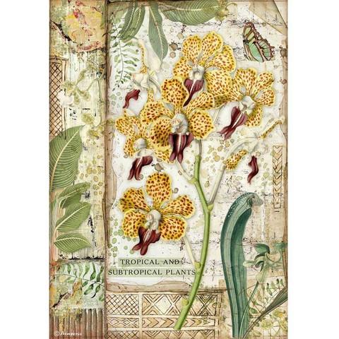 Decoupage-arkki - A4 - Amazonia Orchid