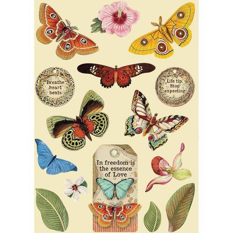 Vanerikoristeet - Levyn koko 14,8 x 21 cm - Amazonia Butterfly