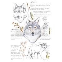 Siirtokuva - 60 x 88 cm - Gray Wolf - Prima Redesign Decor Transfer