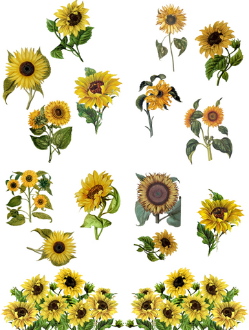 Siirtokuva - 62 x 81 cm - Sunflowers - Belles and Whistles