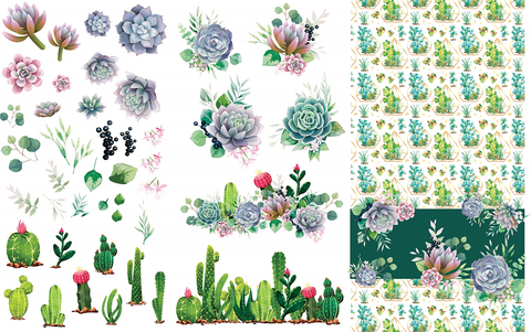 Siirtokuva - 65 x 98 cm - Cacti & Succulents - Belles and Whistles