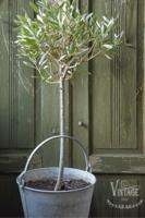 Kalkkimaali - JDL - Vintage Paint - Olive Green - Oliivinvihreä - 100 ml