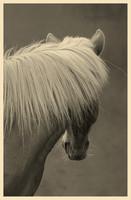 Puukortti mustavalkoisella suomenhevosen kuvalla