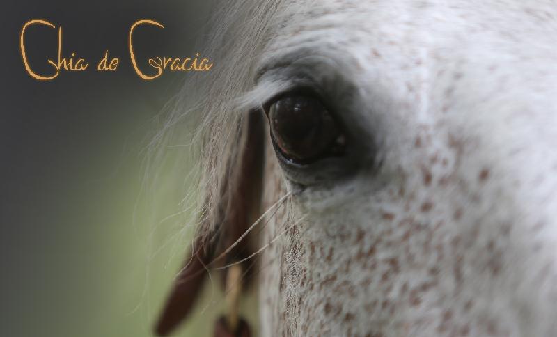Chia de Gracia - miten monipuolistaa hevosen ruokavaliota kevättalvella
