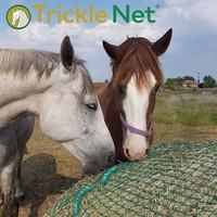 Trickle Net Slow Feeding -Verkko Pyöröpaalille