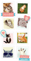 Paper House - Cats Snapshot Sticker, Kohotarrasetti