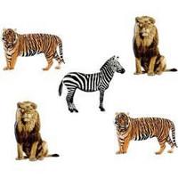 Haaraniitti, seepra, leijona & tiikeri, 12kpl