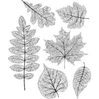 Tim Holtz - Pressed Foliage, Leimasetti