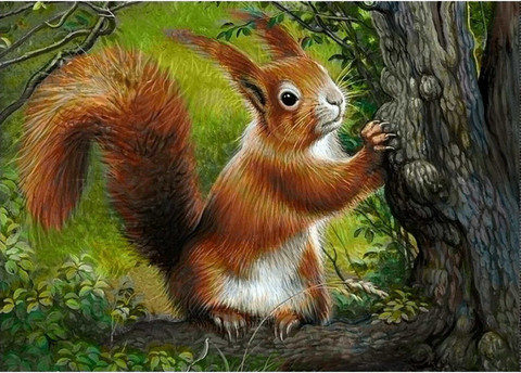Collection D'Art - Forest squirrel, Timanttimaalaus, 38x27cm