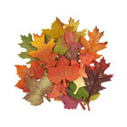 Prima Marketing - Pumpkin & Spice Mulberry Paper Flowers, Fall Leaves