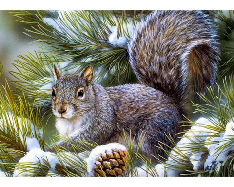 Collection D'Art - Squirrel Pup (K)(N), Timanttimaalaus, 38x27cm