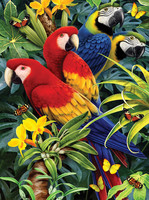 Royal&Langnickel - Paint By Numbers Kit, Majestic Macaws