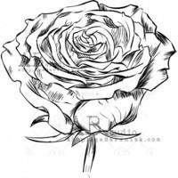 ABstudio by Aga Baraniak - Rubber Stamp, Leima, Roses