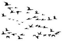 Leima, Migrating Birds