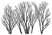 Leima, Three Bare Trees