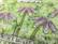 PaperArtsy - E³ Kay Carley 13, Leimasetti, A5