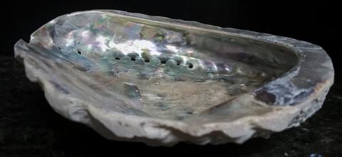 Simpukankuori, n. 11/14 cm