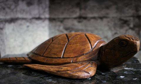 Vesikilpikonna, puuta 270 mm