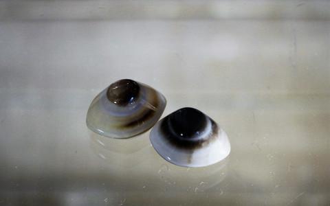 Shivan silmä 17 mm