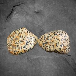 Rumpuhiottu kivi, Dalmatian jaspis