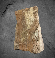 Kivettynyt puu, 140/100/70 mm