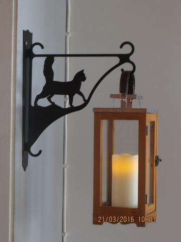 Flower/lantern rack cat walks long-haired