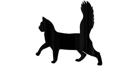 Kaulakoru kissa kävelee PK