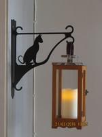 Flower/lantern rack cat sitting short-haired
