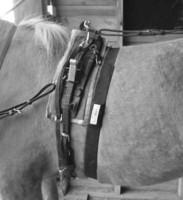 Timer GPS sykevyö hevoselle HR-Basic