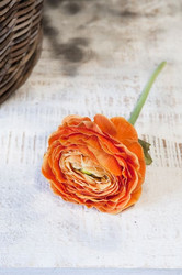 Ranunculus Big Orange