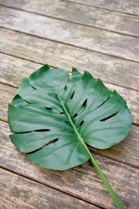 Monstera Leaf L