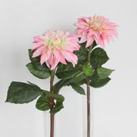 Dahlia rose 50cm