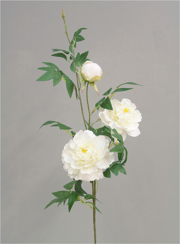 Peony branch White