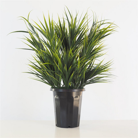 Decorative grass 60cm