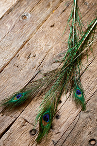 Precious Peacock Feathers 3 pcs